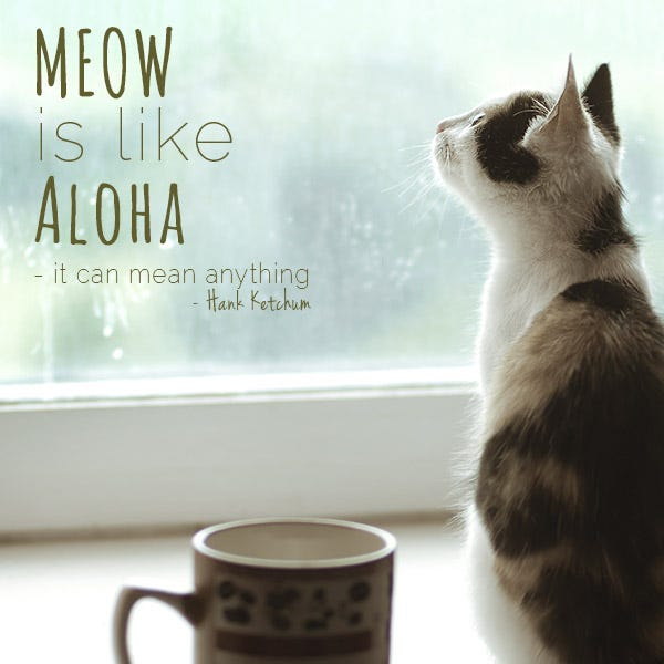 Famous Quotes About Cats And Dogs