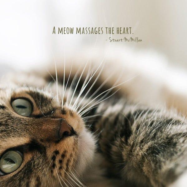 Cat Vs Human Heart