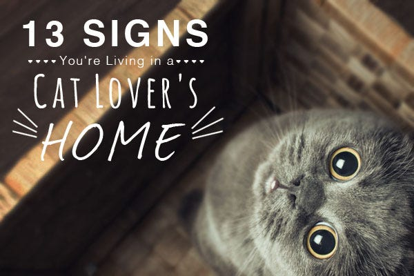 13 Signs of a Cat Lover's Home