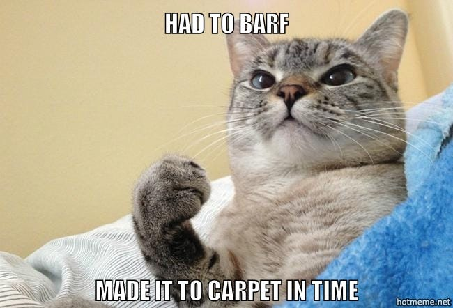 13 Signs You're Living in a Cat Lover's Home