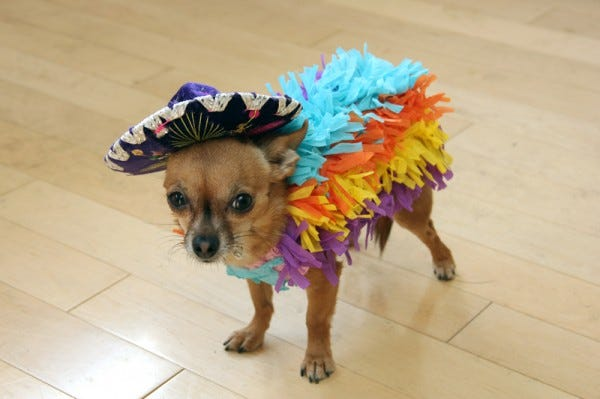 15 Simple, Easy Pet DIY Costumes