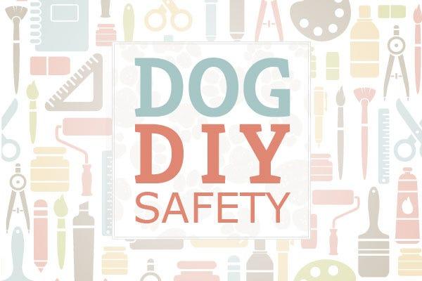 Dog DIY Safety