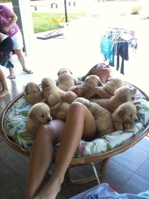 25 Benefits of Loving a Dog
