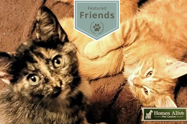 Meet Frankie, Ziggy, Luna, & Gemma