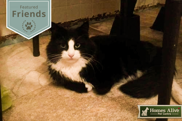 Sylvester - Featured Friends