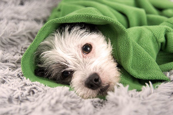 Pet Illness Recovery