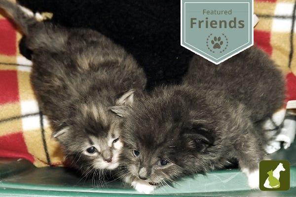 Featured Friends: Meet Bonnie & Clyde!