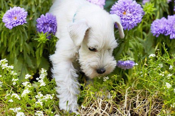 Dog Garden Safety