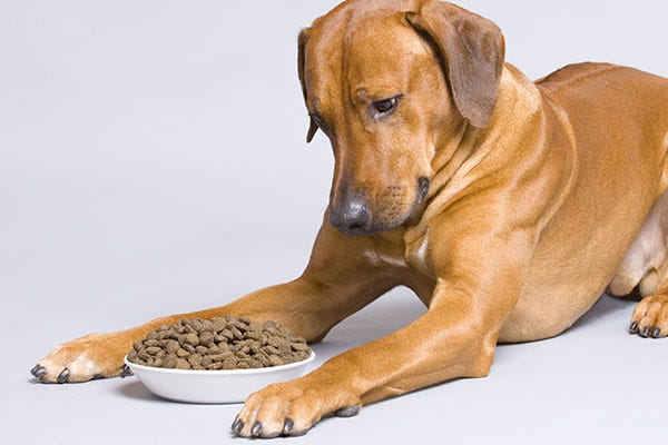 Dog Looking At Food