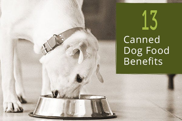 Canned Dog Food Benefits