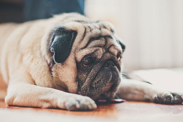 General Pet Toxin Safety