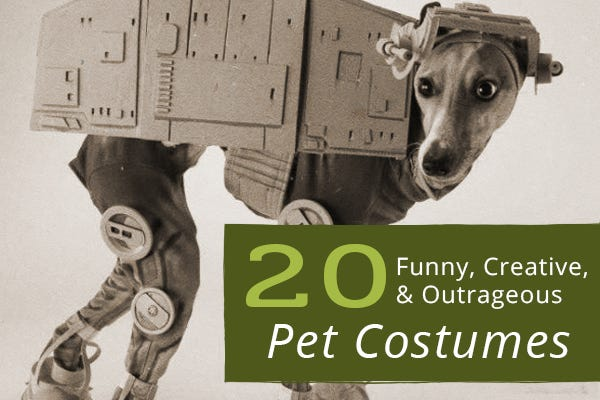 20 Funny, Creative, and Outrageous Pet Costumes