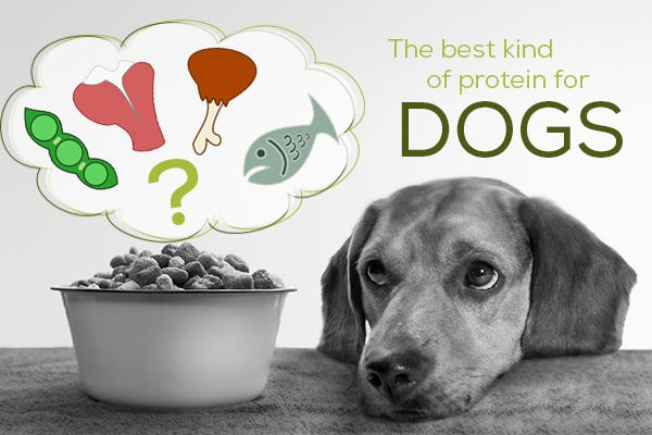 The Best Protein for Dogs