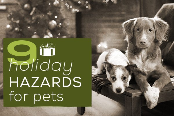 9 Holiday Hazards for Pets