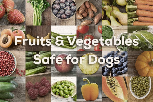 What Vegetables And Fruits Are Good For Dogs