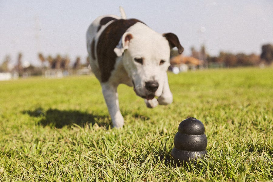 Dog with Kong Extreme