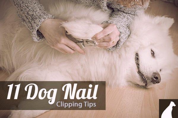 Dog Nail Care Tips 61