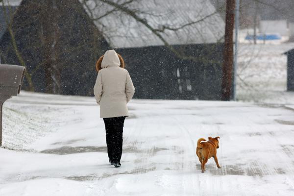 Walking dog in winter