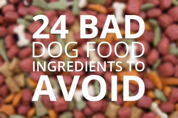 24 Bad Dog Food Ingredients to Avoid