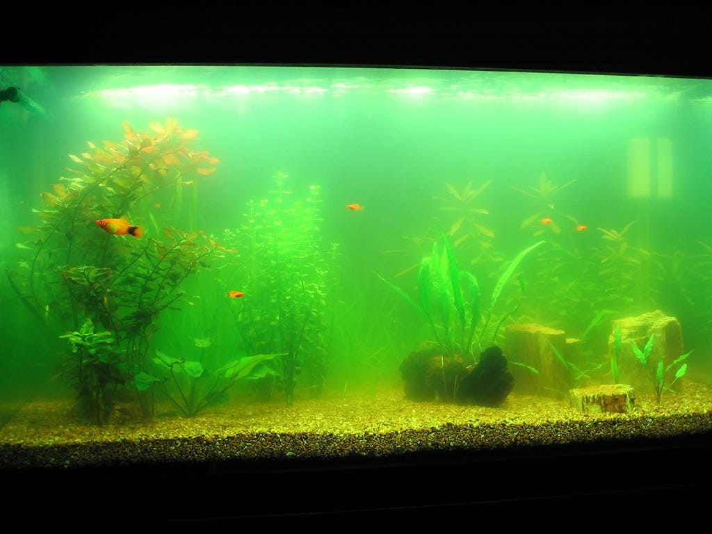 Get rid of cloudy aquarium water once and for all for Cloudy water in fish tank solutions