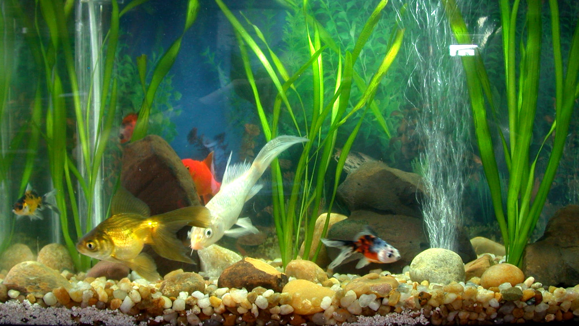 freshwater aquarium fish and plants 2017 fish tank