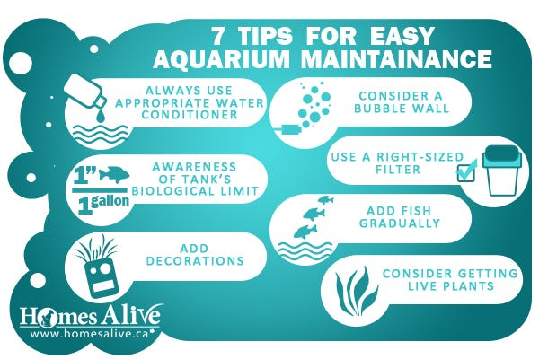 Fish tank maintenance tips video fish tank care 7 for How to take care of fish tank