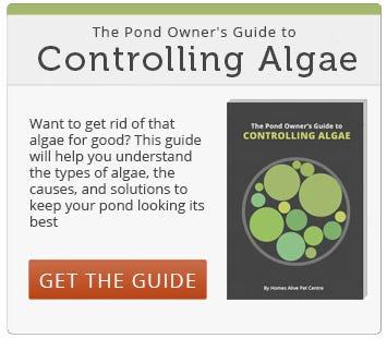 Controlling Pond Algae Guide