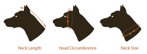 Head Measurement