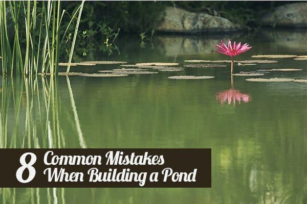 8 Common Mistakes when Building a Pond