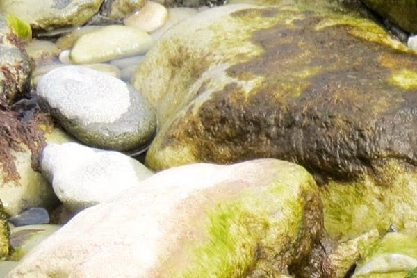 Light Algae on Rocks