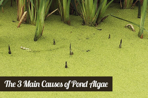 Causes of Pond Algae